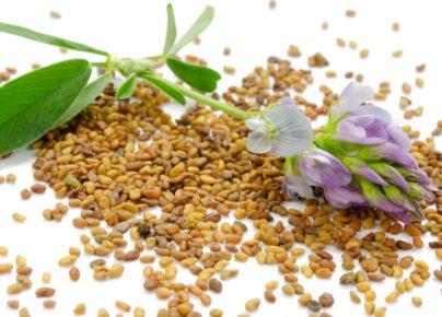9 tác dụng thần kỳ của cỏ Alfalfa đối với sức khỏe ai cũng nên biết